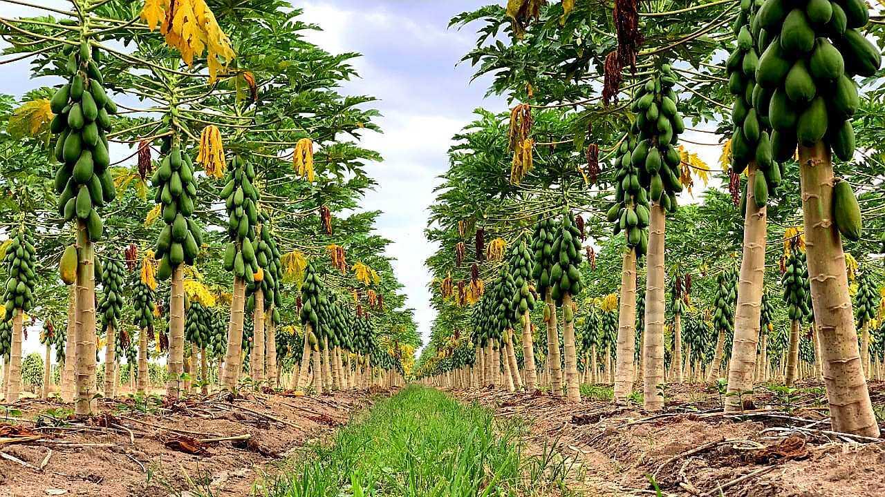 campo de papayón